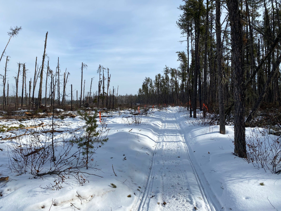 North Side of Boreal Trail - Harvest Complete